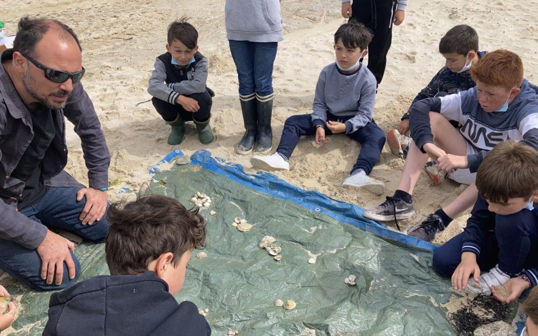 Observation de coquillages sur l'estran et châteaux de sable.